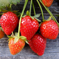 Cheap Red Strawberry Seeds Fruit seeds strawberry seeds Beautiful Plant fruit seeds potted plants garden supplies 200pcs  lot