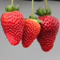 Cheap 250Pcs lot red strawberry seeds Garden fruit seeds potted plants seeds garden supply