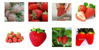 Cheap strawberry seeds DIY Garden fruit seeds potted plants 24 kinds strawberry seeds 100pcs lot