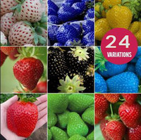 Cheap Fruit seeds strawberry seeds DIY Garden fruit seeds potted plants 24 kinds strawberry seeds 50pcs lot