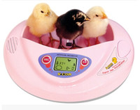 Wholesale The original package of Korea Automatic Cute Mini eggs Incubators Rcom Hatching machine hatchery for chicken duck eggs