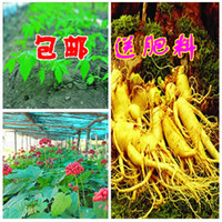 Tree Seeds Ficus Ginseng Landscape Plant Arbitraging ginseng seeds white 50