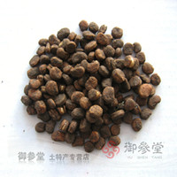 Tree Seeds Ficus Ginseng Landscape Plant Ginseng seed ginseng seeds 10 pieces lot