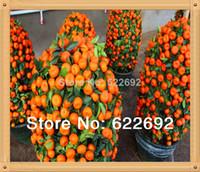 Tree Seeds Woody Plants Perennial 50 Pcs Potted Edible Fruit Seeds Bonsai Climbing Orange Tree Seeds