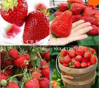Cheap Fruit Seeds secret garden Best   plant garden