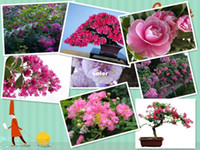 Flower Seeds Bonsai Outdoor Plants 50 SEEDS Red Lagerstroemia indica Crape Myrtle Tree Seeds bonsai flower Seeds