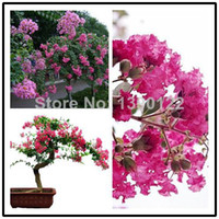 Flower Seeds Bonsai Outdoor Plants 100+ SEEDS Chinese Crape Myrtle Lagerstroemia indica Tree Seeds bonsai flower Seeds * Free shipping