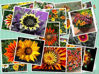 beautiful blooms - 100 Seed Gazania seeds mix colors with beautiful blooms blooms
