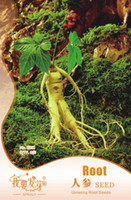 Cheap Tree Seeds Chinese Ginseng Best Bonsai Herbs Ginseng