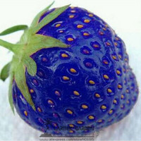 Fruit Seeds Bonsai Succulent Plants 500PCS Organic Blue Strawberry Antioxidant Seeds Delicious Plant Seed New #LT600