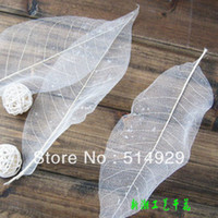 Wholesale Soap Leaves Magnolia leaves leaf vein painting raw materials dried plant specimens bookmark decorations freeshipping