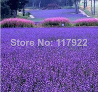 other blooming plants lavender 2014 limited top fasion casa seeds lavender vanilla 20 pcs bag original packaging home garden bonsai tree decor pots planters