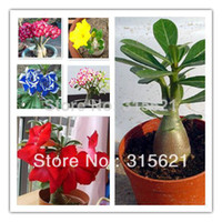 Tree Seeds Bonsai Outdoor Plants Colorful Bonsai Desert Rose Flower Seeds 25pcs Mix Seeds Free Shipping