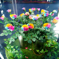 Wholesale Big Discount Pack Seeds China Rare rainbow rose seeds Rose Flower seeds SV003023