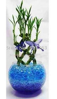 Wholesale Recycle Professional water beads cystal soil for decoration plant KG Freeship by DHL