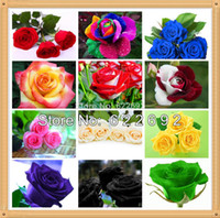Wholesale Love Is Permanent Kinds Of Seeds Packages Each Package Of Rose Seeds ADDS THREE NEW VARIETIES ROSE SEEDS