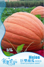 Wholesale Mix minimun Hot selling Giant Pumpkin Seeds Original Pavkage per bagRare Vegetable Seeds