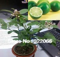 Cheap Fruit seeds10pcs Lot Bonsai Lemon Tree Seeds seed High survival Rate Fruit Tree Seeds For Home garden Backyard