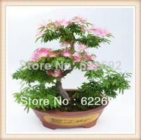 Cheap 30 Piece Bag Bonsai Perfume Albizia Flower Seeds Mimosa Seeds Potted Silk Tree Seeds