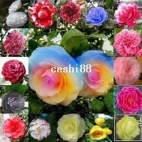 Cheap Flower pots planters rainbow camellias seeds multicolor camellia tree seeds Bonsai plants Seeds for home & garden