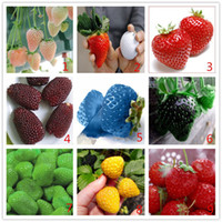 Cheap Vegetables and fruit seeds Strawberry seeds 500 pieces seeds of each color seeds grain Bonsai plants Seeds for home & garden