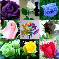Wholesale Each Pack About Pieces Seed Total PACKS Rose Seeds Rainbow Pink Black White Red Purple Green Blue Rose Seeds