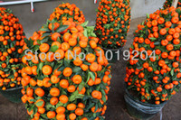 other Bonsai Outdoor Plants Free shipping, mini potted orange tree climbing seed 35PCS, then on the results of bonsai plants