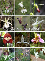 other Bonsai Outdoor Plants Free shipping, 12 kinds of the seeds of the world's rare orchids, 200 seed mixed color orchids, potted orchids
