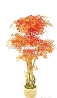 other Bonsai Outdoor Plants Free shipping, mini bonsai flame maple seeds Canada, 10PCS a pack, beautiful tree