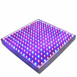 Wholesale Водить вырастите светильник светодиодных гидропоники завода светать панели красный синий W завод СИД вырастите света Lm светодиодов панели фары В Freeshipping
