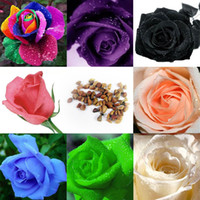 Wholesale 50Pcs Multi colors Flower Seeds Holland Rose Seeds Lover Gift Garden Home