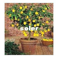 Cheap Bonsai Lemon Tree Seeds High survival Rate Fruit Tree Seeds For Home Gatden Backyard (40Pieces) Free Shipping