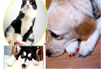 Wholesale 100pcs Soft Dog Nail Caps Claw Control Paws off XXL Adhesive Glue