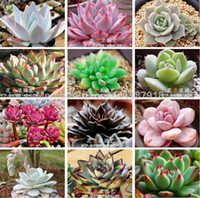 Wholesale Mix Succulent plants Lithops seeds Fairy flower Fleshy seeds Bonsai plants Seeds for home garden Seeds bag