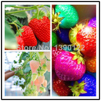 Cheap 9 kinds of strawberry seeds, mixed 1000 seeds, balcony plants, garden planting, potted plants