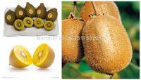 Cheap Wholesale 200pcs Red Kiwi Seeds High Nutrient Kiwi Fruit Tree For Home Garden Bonsai FTF002