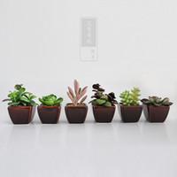 Wholesale Home Patio Lawn Garden Decorations Simulation of Succulents Simulation of plant