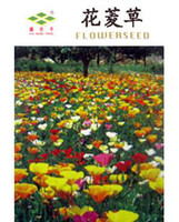Cheap Flower seeds eschscholtzia seeds red blended-color ginseng flower kuang lichun 80 PCS Bag flower Bonsai Tree Decor