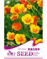 Cheap Flower seeds flower nsutite seeds ginseng flower kuang lichun bonsai flowers 50 PCS Bag Original Packaging Home Garden