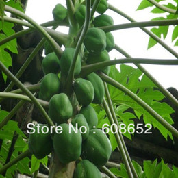Wholesale Farm yield large papaya seeds of vegetables flowers fruits seeds Garden Supplies bag Home Garden Free Delivery