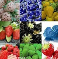 Wholesale strawberry seeds On Sales kinds of strawberry seeds white yellow blue black red green great strawberries