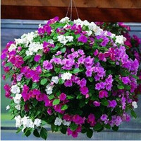 Wholesale 100 Petunia seeds potted balcony planting seasons sprouting mixed colors