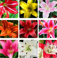 Wholesale 50 Lily seeds flower seeds potted plants budding varieties mixed colors