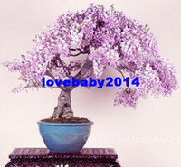 Cheap Pretty Bonsai Little Plant, Mini Potted Pink Cherry Tree Seeds 30 Piece