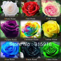 Wholesale Flower seeds Rose Seeds Include Pink Black White Red Purple Green Yellow Blue Rainbow Colors