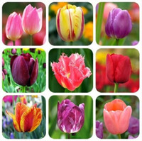 plant seeds - 100pcs bag Tulip seeds flower seeds potted plants budding varieties mixed colors