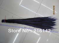 Wholesale inch cm royal blue Lady Amherst Pheasant Tail Feathers