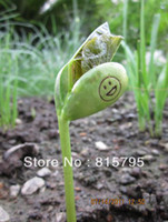 Wholesale 100 Growth Rate Magic Bean Free side logo print if English Jack Bean Love Happy Miss w Sketch Bonsai Green Home Decor