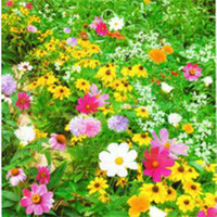 Wholesale 2014 New Desiner Bag Flowers Seeds Colorful Drought tolerant Mixed Wild Flower Seeds