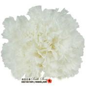 Wholesale Fresh flowers preserved fresh flower handmade diy cm mini flower small